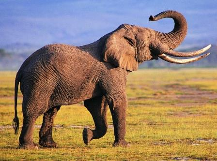 Great Elephant Wallpaper Phone - Animal Wallpapers